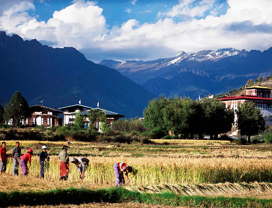Pirinç tarlaları Bhutan'ın en önemli geçim kaynaklarından biri.